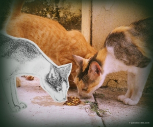 GA_Sharing with ferals