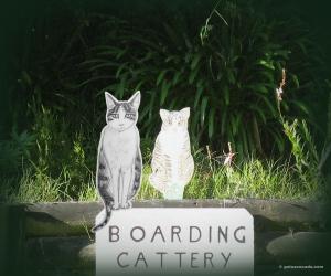 GA_cattery